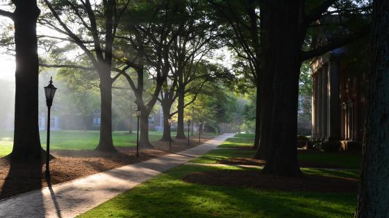 Campus and trees at early morning fog