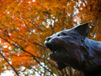 Wildcat statue head in front of orange fall leaves on trees