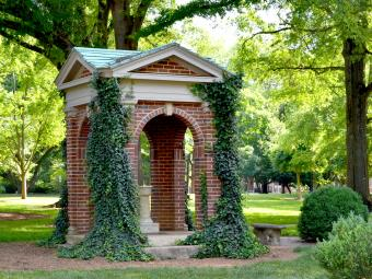 Old Well covered in ivy in front of green trees