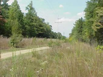 Power Lines Cut Ecological Preserve