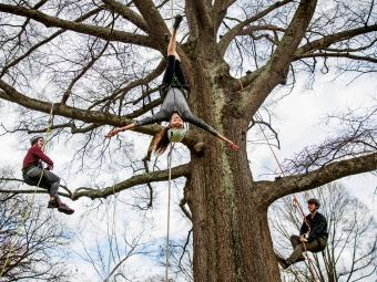 Davidson Outdoors tree climbing demonstration with three students hanging on a tree, one upside-down