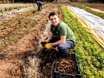 Student Worker at Farm digs up carrots