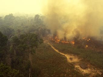 Amazon Rainforest on Fire