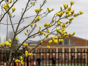 Yellow flowers bloom in front of Richards Stadium and the Union